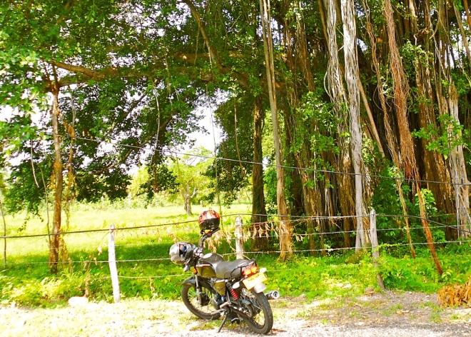 Moto Marta3