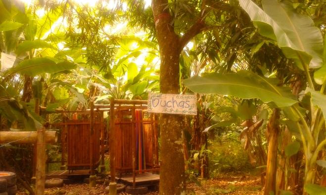 Permacultura, purificazione acqua con le radici