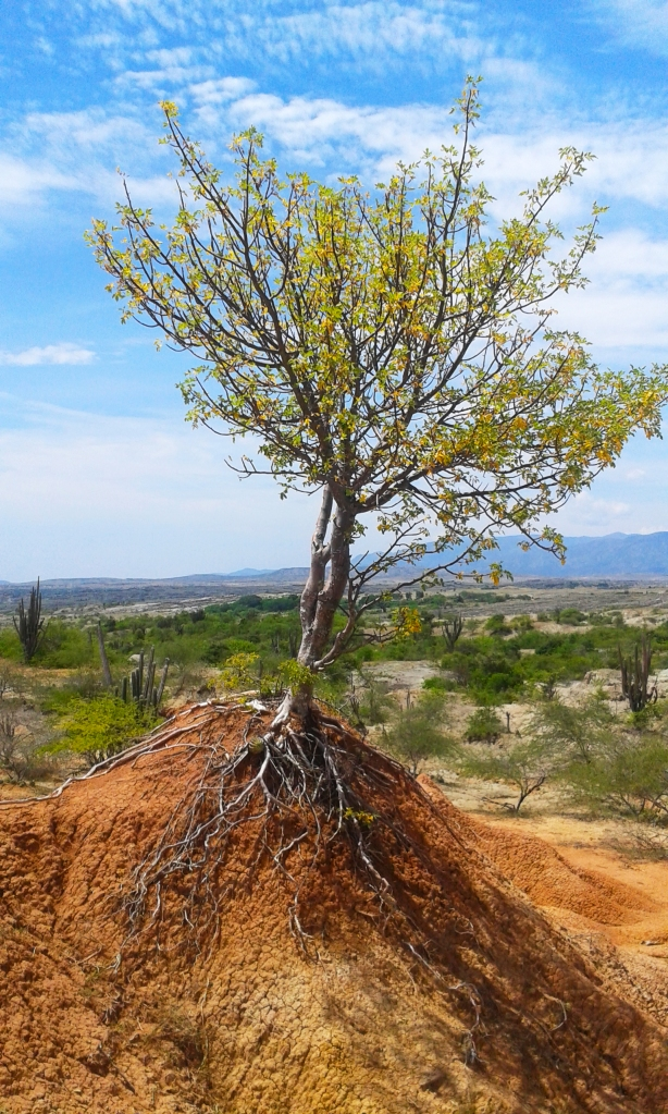 El desierto del Tatacoa