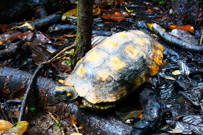 spedizione in amazzonia tartaruga