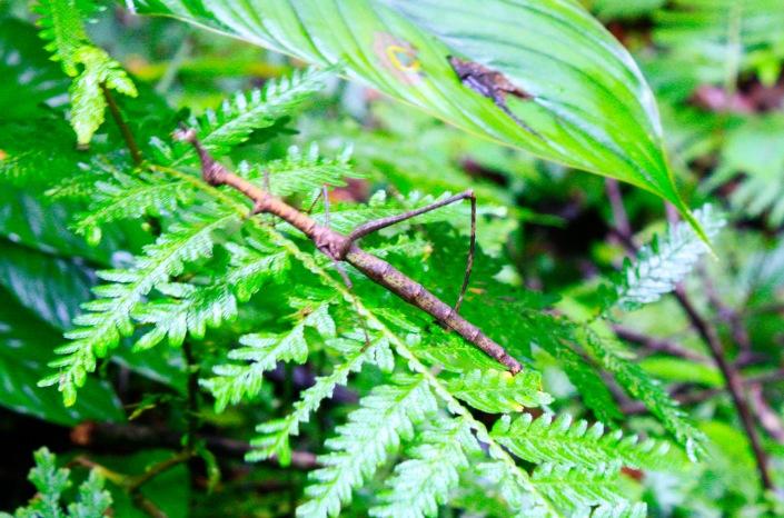 spedizione in amazzonia, amico insetto