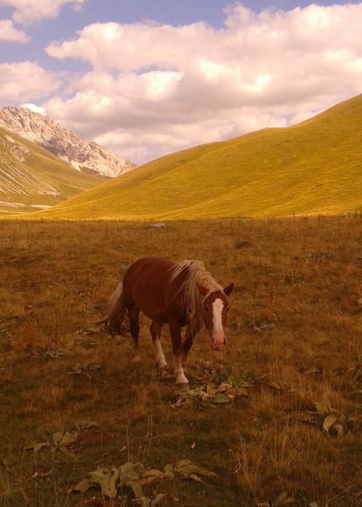 Cavalli a Campo Imperatore, Gran Sasso, Abruzzo