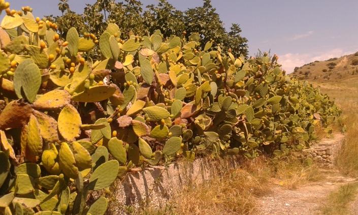 raccolta frutta per strada, ecologia, permacultura