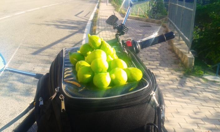 raccogliere frutta per strada ecologia fichi