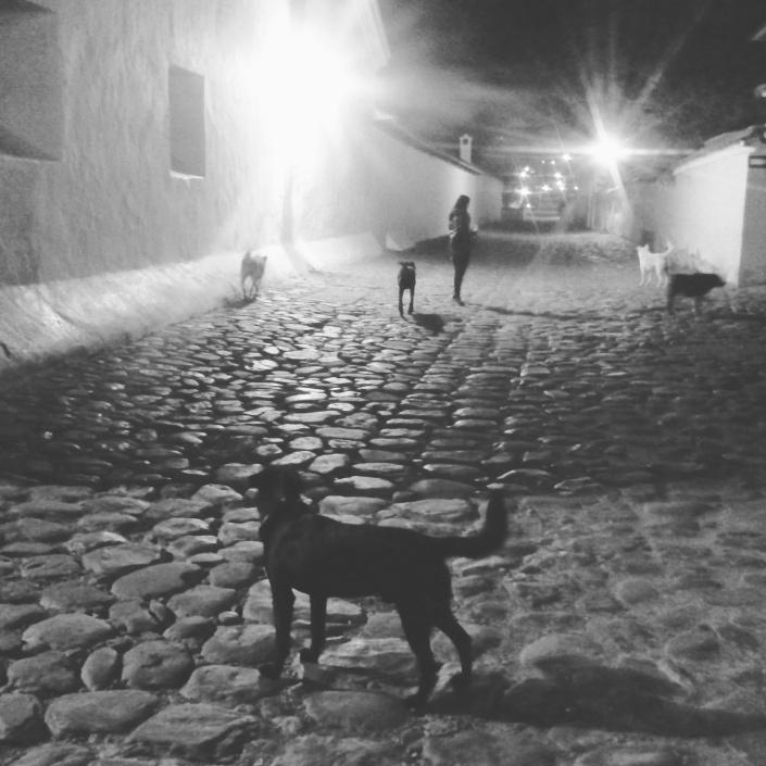 blog crescita personale meditazione spiragli di luce amici quattro zampe lungo la strada